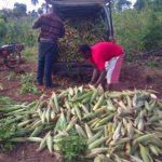 HOW TO START AS AN AGROPRENEUR