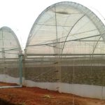 Greenhouse Vegetable Production: The Costs and Benefits