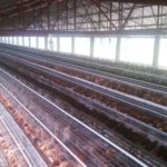 Want Daily Income, Consider Layer Eggs Business
