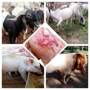 Abattoir, Dressing, Meat, Pork, Mutton, Slaughter