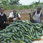 START-UPS: GET UP TO US$5000 GRANT IN YOUTH AGRIPRENEURS PROJECT (YAP)