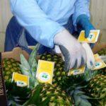 Branding Agribusiness: Surefire Way to Win Customers