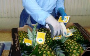Agribusiness Branding