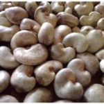 Raw Cashew Nut Processing