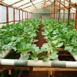 Kenya Nationals: Apply for Training Scholarship in Hydroponics Farming Technology
